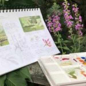Nature Journaling and Field Sketching