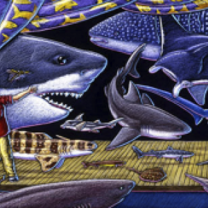 Sharks MOOC Course Image